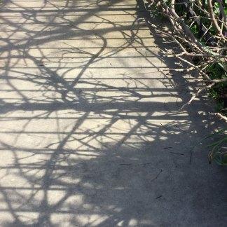 bray_annem_shadow6